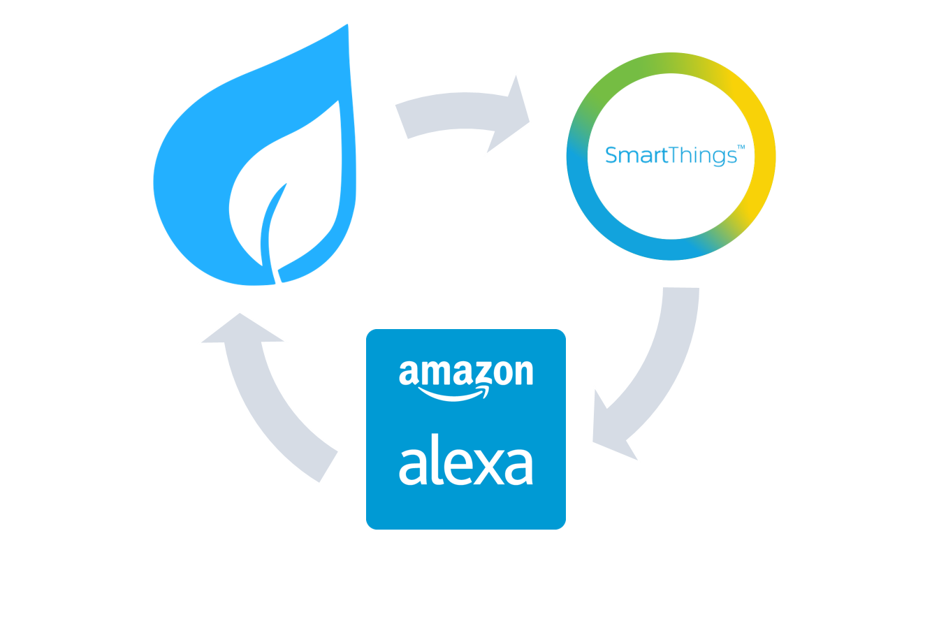Spruce-ST-Alexa