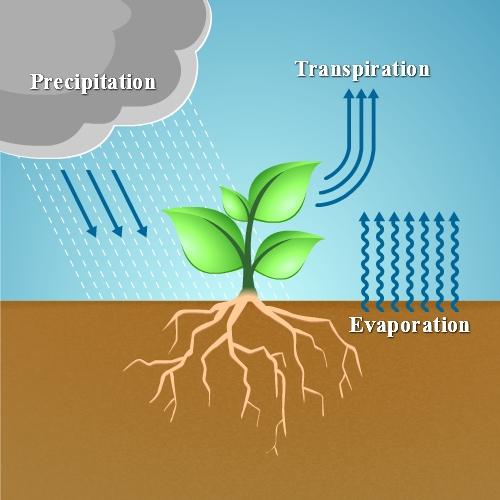 spruce ET evapotranspiration